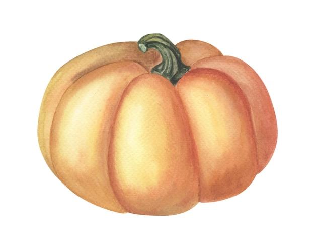 Abóbora laranja em aquarela. colheita de outono. projeto de aquarela em branco