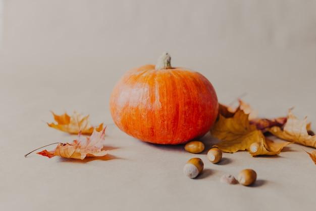 Abóbora laranja em fundo de papel. decorações de halloween com abóbora e folhas amarelas e bolotas ao redor.