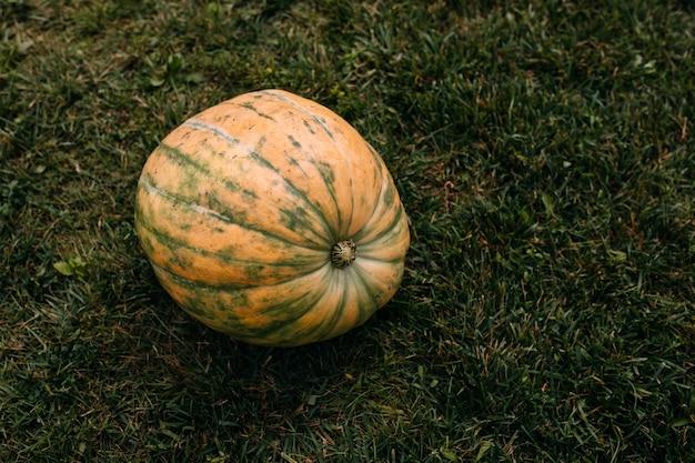Abóbora laranja grande na grama verde