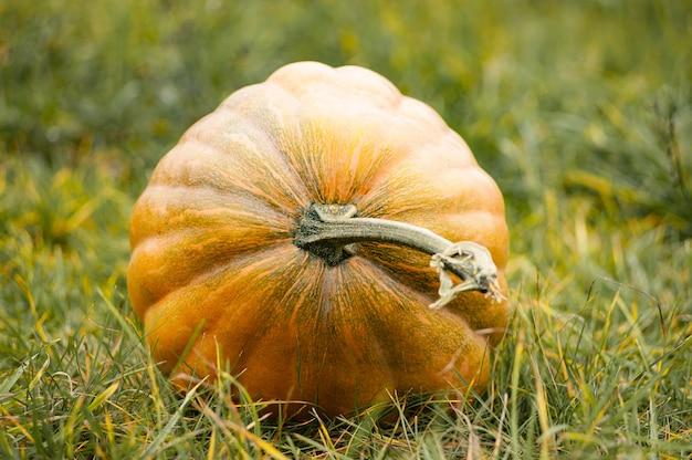 Abóbora madura grande na grama. fundo de outono. conceito de natureza. dia das bruxas, ação de graças.