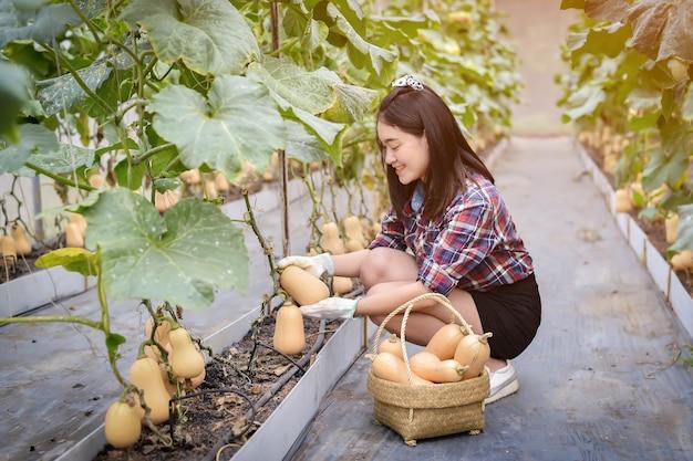 Abóbora na fazenda butternut. abóbora pendurada na árvore e crescendo no jardim verde. colheita do agricultor na fazenda.