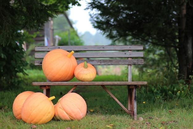 Abóbora outono natureza ao ar livre