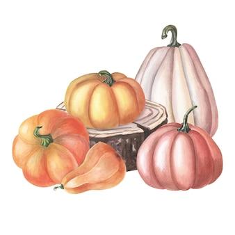 Abóbora vermelha em aquarela. ilustração em aquarela sobre fundo branco. grupo de vegetais.