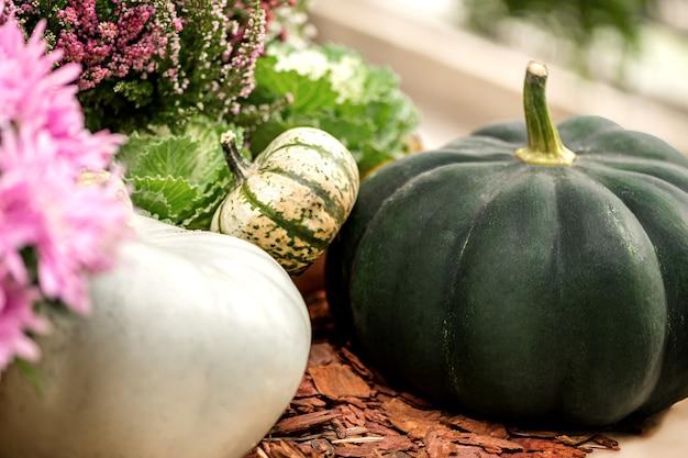 Abóboras brancas e verdes de tamanhos diferentes colhidas entre flores em vasos e urzes