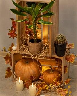 Abóboras de halloween em caixotes de madeira com velas, dracaena fragrans golden coast, cactos