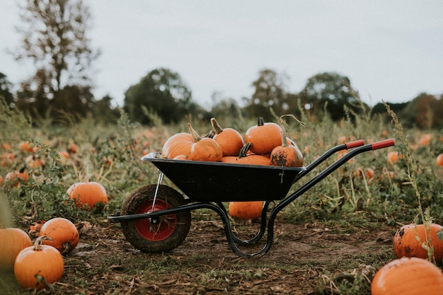 Abóboras de halloween em um carrinho de mão sombrio de outono
