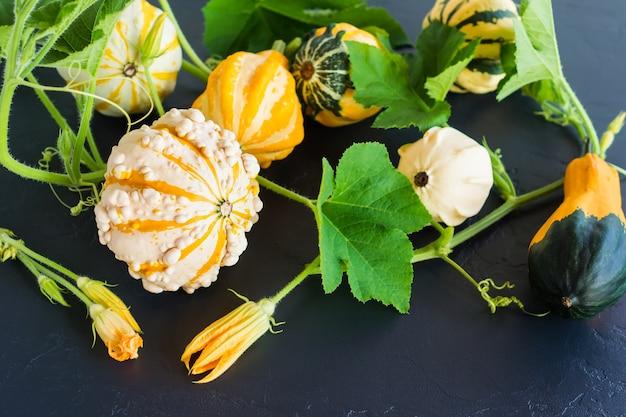 Abóboras de outono decorativas de diferentes formas e cores em um fundo preto. vista do topo.