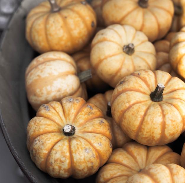 Abóboras de outono decorativas laranja frescas