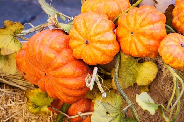Abóboras de outono no chão