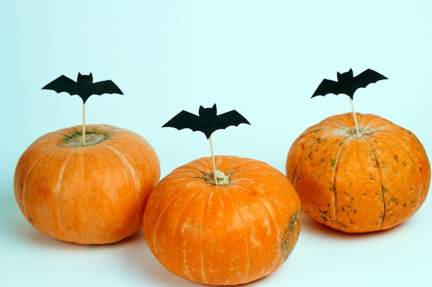 Abóboras decoradas com papel cortado morcegos em um fundo branco