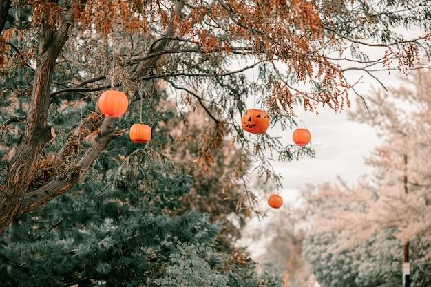 Abóboras decorativas penduradas em árvores