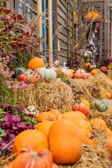 Abóboras diferentes de cor e tamanho no mercado ao ar livre, comida de outono