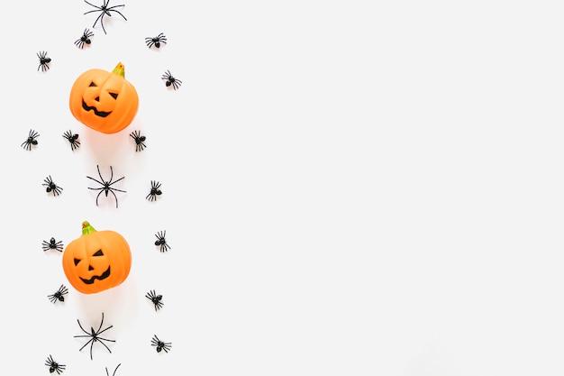 Abóboras e aranhas colocadas em fileira