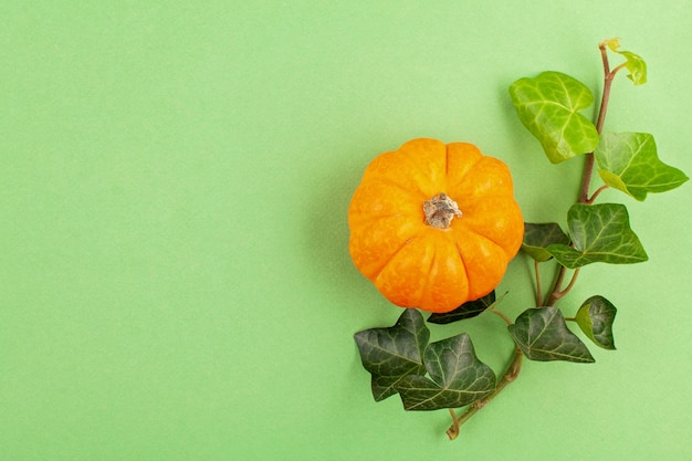 Abóboras e folhas sobre fundo pastel