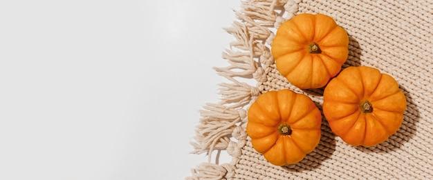 Abóboras frescas de laranja maduras em fundo branco. espaço para maquete de texto do conceito de halloween