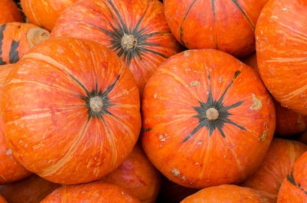 Abóboras laranja como pano de fundo