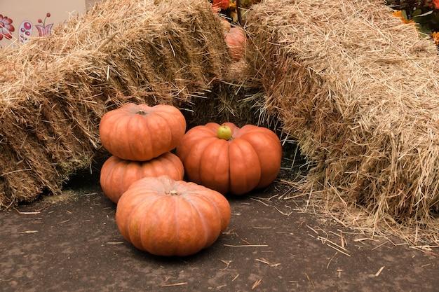 Abóboras laranja e maçã ficam perto dos fardos de palha amarela no festival da colheita de halloween