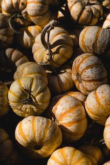 Abóboras laranja
