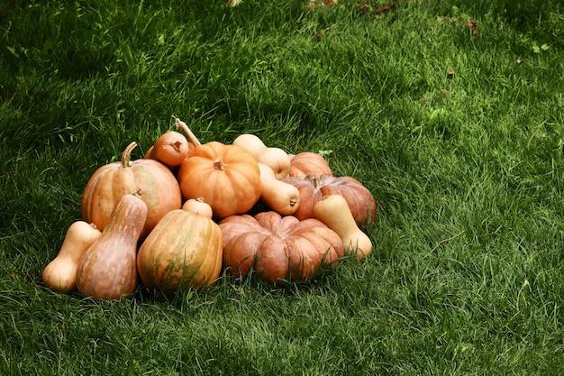 Abóboras na grama verde. colheita de abóbora. vegetais de outono. copie o espaço
