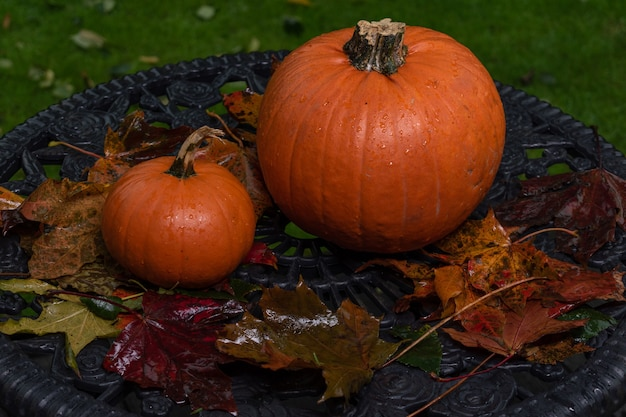 Abóboras na mesa do jardim com folhas molhadas da chuva de outono.