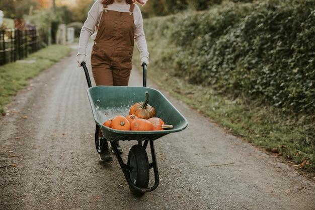 Abóboras recém-colhidas em um carrinho de mão