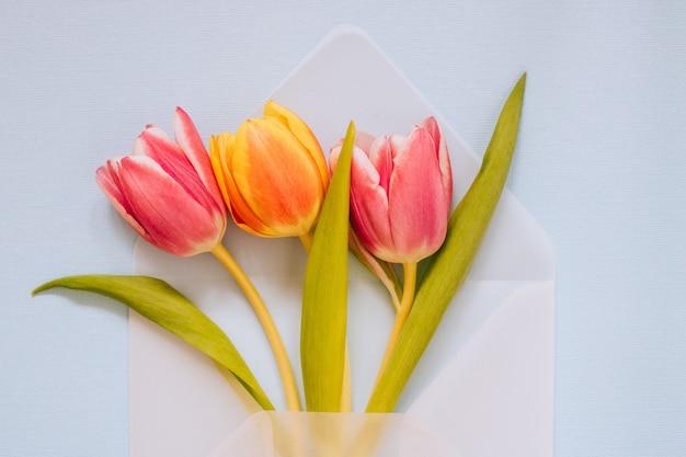Abra o envelope transparente matte com tulipas multicoloridas sobre fundo azul. conceito de páscoa, plana leigos, copie o espaço.