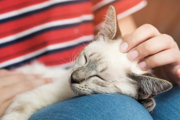 Abraço da mulher gato bonito. amizade amante dos animais. confie em amor amigo de humano.