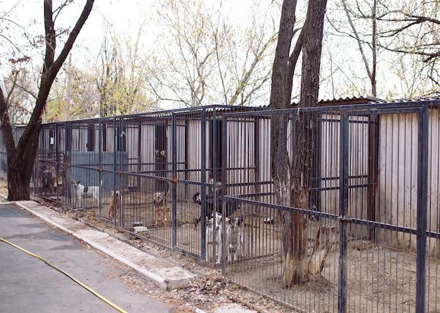 Abrigo para cães vadios.