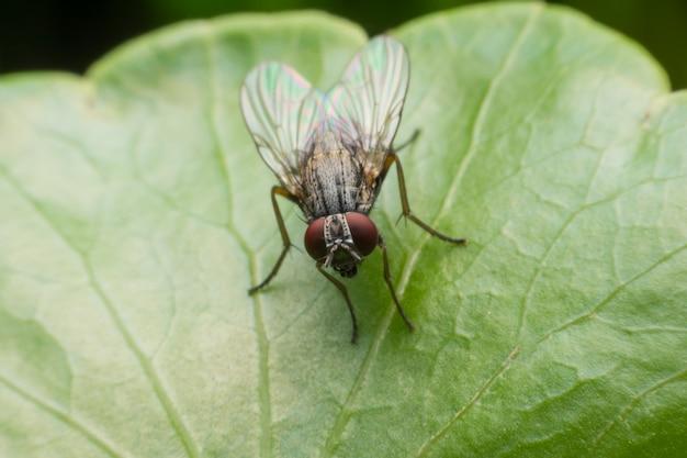Abrigue a mosca no fim extremo que senta-se acima na folha verde.