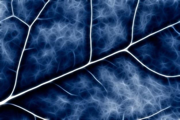 Abstrato crucifer macro azul