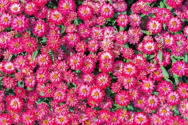 Abstrato de flores. belo padrão floral.