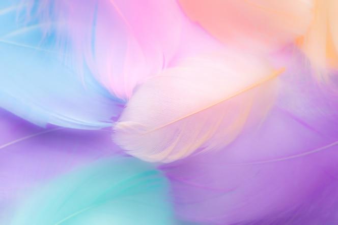 Abstrato de penas de cor pastel