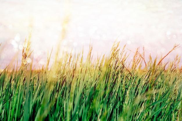 Abstrato de verão com grama verde e céu azul e bokeh pintado brilhante