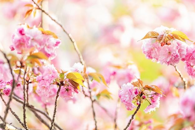 Abstrato floral primavera da natureza