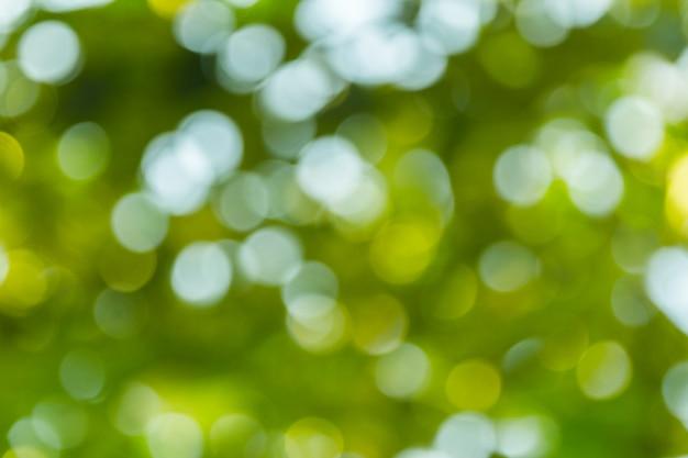 Abstrato verde bokeh natural