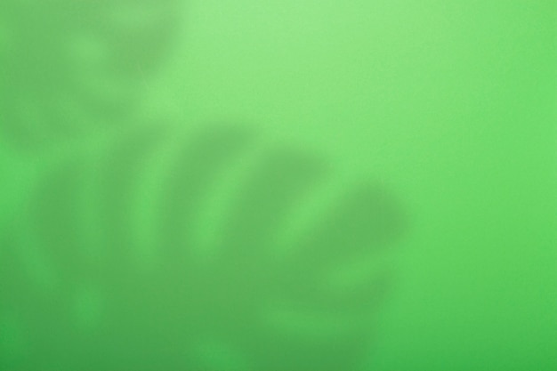 Abstrato verde e sombra da planta tropical monstera.