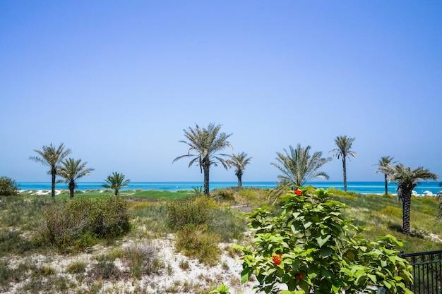 Abu dhabi. linha costeira de praia limpa da ilha de saadiyat, no golfo arábico. emirados árabes unidos.
