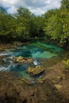 Abundância de manguezais na tailândia