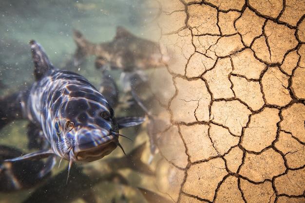 Abundância e seca causada pela mudança climática
