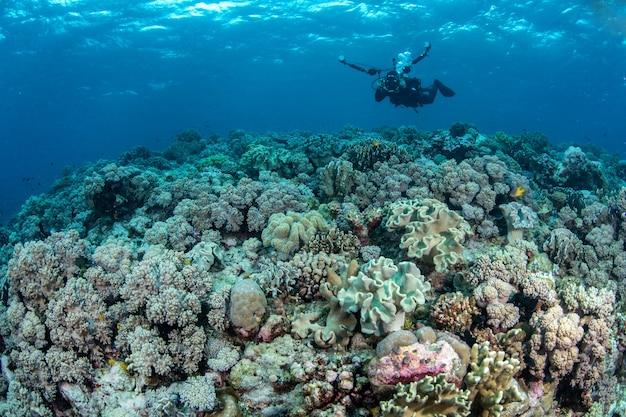 Abundância recife e vida marinha no parque nacional de wakatobi, na indonésia