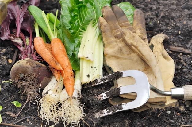 Acabado de verduras