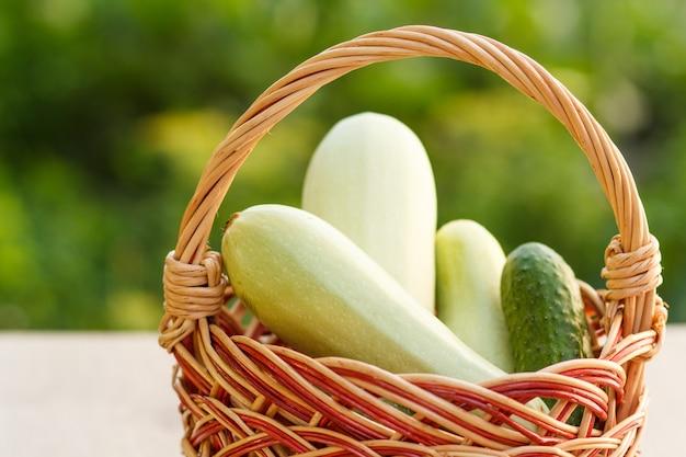 Acabei de escolher abobrinhas e pepino em uma cesta de vime sobre fundo verde natural. apenas vegetais colhidos.