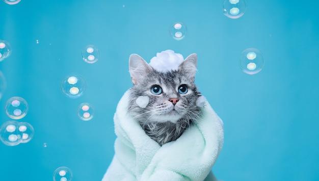Acabei de lavar lindo gato fofo com espuma de sabão na cabeça em azul