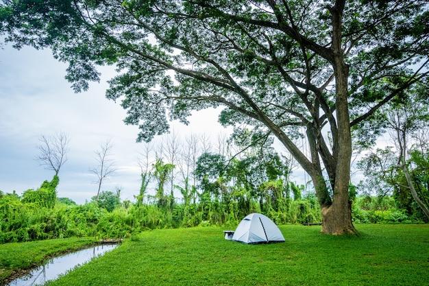 Acampamento e barraca sob uma árvore no parque natural