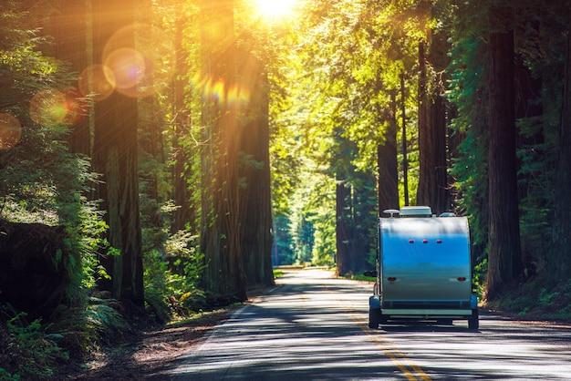 Acampamento em redwoods