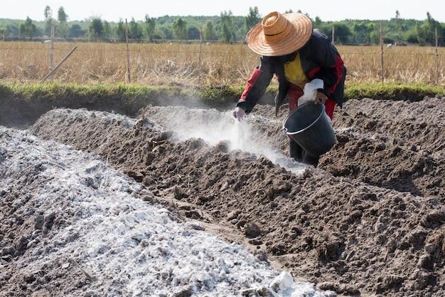 Ação de calagem no campo do solo