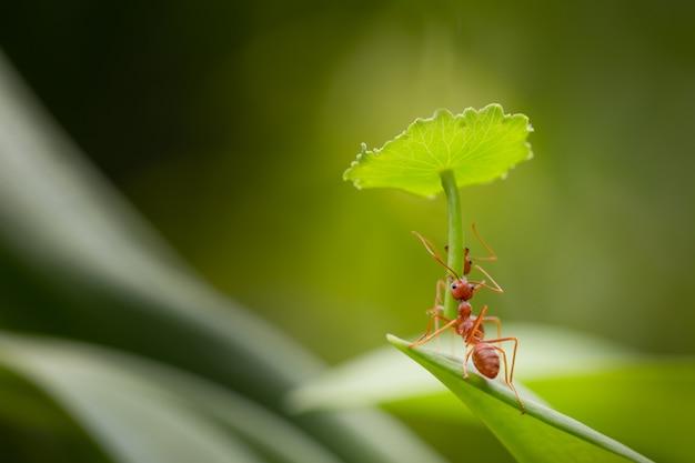 Ação de formiga em pé.não carrega guarda-chuva para proteção