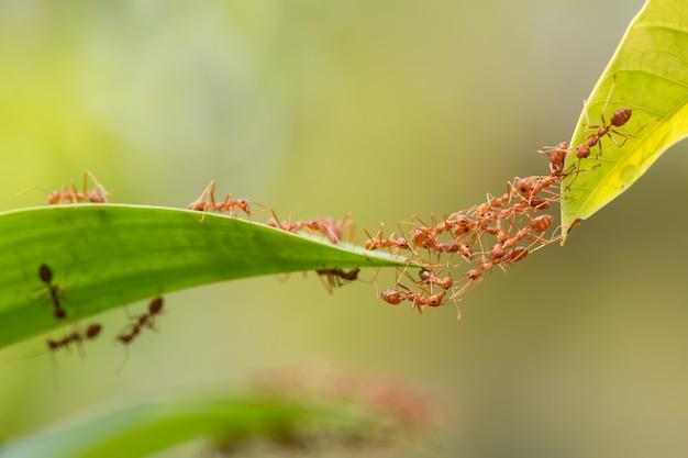 Ação de formiga em pé.
