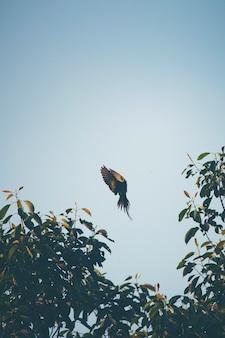 Ação voadora de pássaro