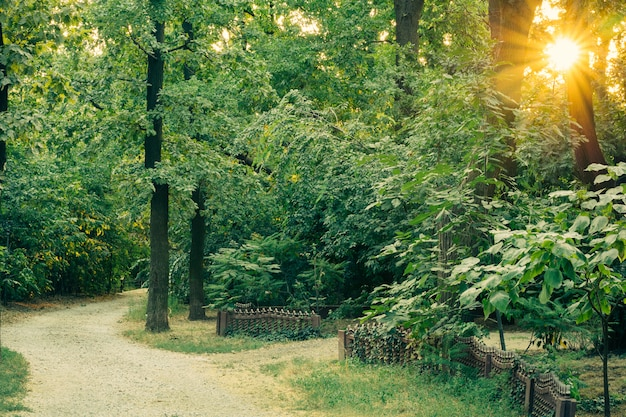 Acesso estrada de cascalho entre as altas árvores verdes exuberantes ao pôr do sol
